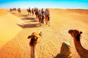 Things to Do on Desert Safari