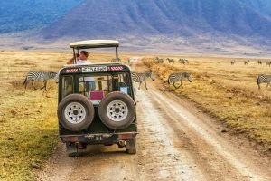 Safari Activities – Things to Do On A Safari